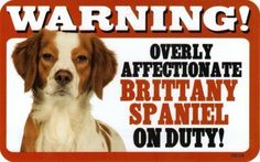 WARNING! Overly Affectionate Brittany Spaniel on Duty! 8  x 5  Humorous Sign