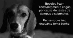 Coelhos, ratos e cachorros sofrem muito nesses testes. Veja porque você deve apoiar o fim dessa crueldade.