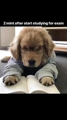 Funny Animal Memes, Dog Memes, Cute Funny Animals, Cute Baby Animals, Funny Dogs, Cute Baby Dogs, Cute Cats And Dogs, Cute Dogs And Puppies, Cute Animal Videos