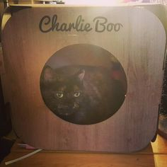 Oh wow  Charlie Boo is so beautiful  thank you so much!   sorry about the catnip and your rug  #cat #catsofinstagram #cats_of_instagram #catfurnature #catfurniture #catsinboxes #cattoy #INSTACAT_MEOWS #cutecat #PurrMachine #catsinboxes #catbox #Excellent_Cats #BestMeow #dailykittymail #thecatniptimes #catcube #catpod #ArchNemesis #FlyingArchNemesis #myindoorpaws #ififitsisits #cutecatcrew #catchalet #catnip #themeowdaily #kitty #dailykittymail #catgrass