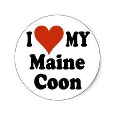 I love my maine coon