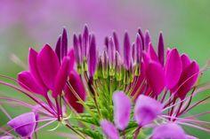 prettylittleflower: viasgmillionxu2000