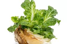 Buying fresh produce can feel expensive especially if you're purchasing fruits or vegetables in their offseasons. There are however many fresh foods that you Green Onions Growing, Growing Lettuce, Head Of Lettuce, Growing Mushrooms, Regrow Celery, Regrow Vegetables, Fruits And Vegetables, Growing Vegetables, Le Baobab