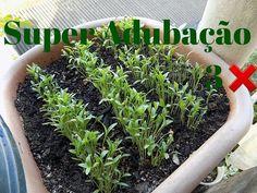 Maxixe em Vaso, Venha Aprender Plantar!!! - YouTube