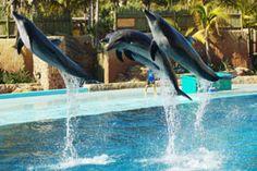 Dolphin show - UShake Marine World