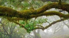 The laurel trees of Madeira Natural Park, Portugal (© Frank Krahmer/Getty Images)