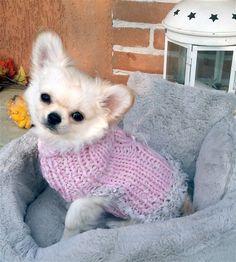 Elegant Chihuahua Coat  Small dog sweater  Pet Fashion by nerina52