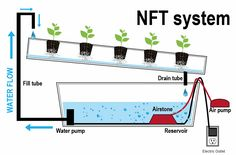 Hydroponic Gardening Ideas N. (Nutrient Film Technique) System The N. system (Nutrient Film Technique) is quite popular with home hydroponic growers as well. Mainly because of it's fairly simple design. Aquaponics System, Hydroponic Farming, Backyard Aquaponics, Hydroponic Growing, Aquaponics Plants, Nft Hydroponics, Ebb And Flow Hydroponics, Permaculture, Diy Hydroponik