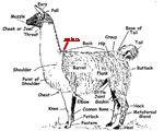 Where to Measure a llama