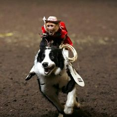 Dogs are just monkey horses.