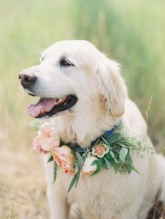 So naturally any wedding that has a gorgeous pup in it captures my heart  | wedding | | wedding photography ideas | | fury friends | | wedding photography | | Wedding pets | #wedding #weddingphotography https://www.roughluxejewelry.com/