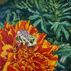 """Bee Enduring     Acrylic on Canvas - 8"""" x 8""""             $180 Available in the online shop - both the original and as a Limited Edition Print. I know marigolds do not attract insects. While brainstorming a title for this piece, I read that bees wouldn't like them either. Hmmm....funny my marigold seemed to attract this guy! I love the brilliant colours shining from this scene - painting it was a joy."""