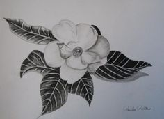 Image detail for -Charcoal Magnolia I Drawing by Paula Peltier - Charcoal Magnolia I ...