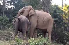 After Being Sold To Give Rides, A Baby Elephant Had A Heartwarming Reunion With Her Mother