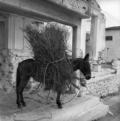 lamia, greece may 1959 donkey set includes photographs of the delphi ruins; also shots of city life in lamia, greece. from nick and maggie's spring 1959 trip to europe. part of an archival project, featuring the photographs of nick dewolf Greece Photography, Athens Greece, Photo Archive, Donkey, Greek, Horses, Black And White, Photographs, Animals