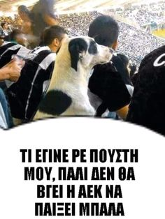 Dogs, Sports, Animals, Hs Sports, Animales, Animaux, Pet Dogs, Doggies, Animal