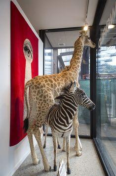 denise lestrange corbet and giraffe Giraffe, Google Search, Felt Giraffe, Giraffes