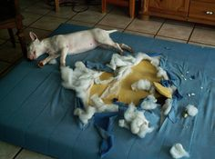 #dog #naughty #bully