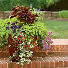 85 Creative Container Gardens | Coleus, Joseph's Coat, Verbena, Fan Flower, Calibranchoa    Unlike cut blooms, a living flower arrangement planted in a container gives you color and beauty for months. Combine plants that thrive in the same growing conditions and offer colors and textures that complement each other.