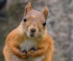 """A Cute Squirrel Picture - News - Bubblews  Speak Freely. Write Your World.  Lydia Roberts:"""