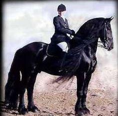 Black Stallion Horse Hummingbird Pictures