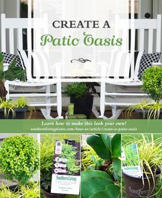 Create a Patio Oasis Outdoor Chairs, Outdoor Furniture, Outdoor Decor, Agapanthus, Southern Living, Cut Flowers, Oasis, Bloom, Outdoors