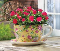 China Rose Teacup Planter bright pink buds and sunny yellow brighten your garden - Modern Herb Planters, Flower Planters, Planter Pots, Planter Ideas, Teacup Flowers, Large Flower Pots, China Rose, Rose Design, Tea Cup Saucer