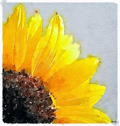 Sweet Leaf Notebook: Watercolor Sunflowers Sketch what we see. Sunflower Canvas, Sunflower Drawing, Watercolor Sunflower, Watercolor Flowers, Sunflower Paintings, Watercolor Pencil Art, Watercolor Paintings, Watercolors, Easy Watercolor