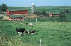 Cedar Grove Cheese farm in Plain, WI