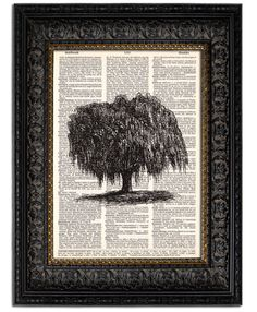 WEEPING WILLOW TREE art print book page print on vintage dictionary page upcycled dictionary art print 8x10. $10.00, via Etsy.
