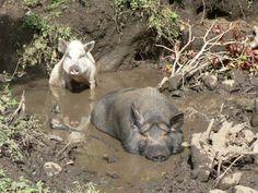 Heerlijk in de modder