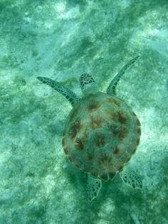 Turtle, My Photos, Aqua, Ocean, Colour, Animals, The Sea, Animales, Animaux