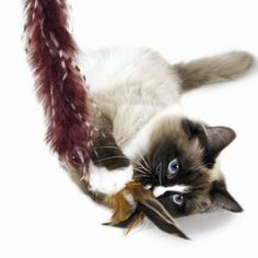 1000 images about cat 39 s meow on pinterest cat toys for Diy cat teaser wand