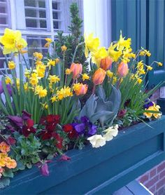 A colorful window box in Philly. Peach tulips, daffodils; purple, wine, white, pansies; yellow & peach primroses & topiary