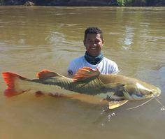 Pesca Esportiva de Pirarara Temporada de Pesca 2016 #RioAraguaia by rioaraguaiabandeirantes