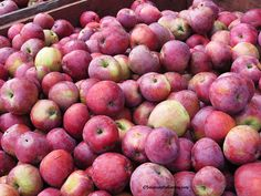 Garden columnist Susan Mulvihill shares her tips on growing apples organically, based on her and her husband's personal experience in their home orchard.