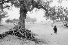 tree roots... Gorom Gorom, Burkina Faso. Soil erosion by sudden downpour March 5, 1985