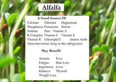 Alfalfa Benefits   Eating My Way To Better Health