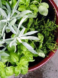 One pot indoor herb garden