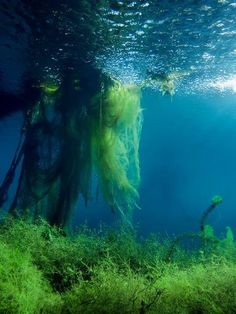 Plitvice lakes, underwater photography - beautiful colors!
