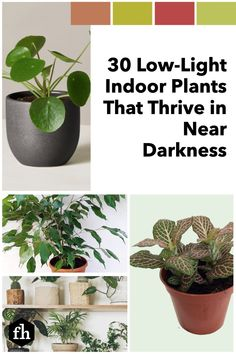These low-light houseplants thrive without direct sunlight, so now you can have a touch of Mother Nature in every corner of your home. Arrowhead Plant, Low Light Plants, Iron Plant, Lucky Bamboo, Low Maintenance Plants, Spider Plants, Snake Plant, Low Lights, Houseplants