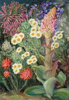 A Selection of Flowers from Table Mountain, Cape of Good Hope by Marianne North; c. 1882; Oil on board; Collection: Royal Botanic Gardens, Kew, England