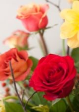Care Of Rose Bushes - What Do Roses Need Most roses demand the basic requirements in order to grow and flower at their best: Sun, Soil, Water and Food. Roses need to be deep watered regularly when newly planted and until the rose is established, about one year.