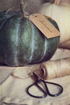 Lovely way to gift someone with a pumpkin!  Green pumpkin with gift tag and scissors by Sandra Cunningham