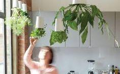 Resultado de imagen para boskke sky planter