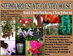 & at Stephward Estate Plant Tissue, Exotic Plants, All Over The World, South Africa, Orchids, Things To Do, Coast, Nursery, Posters