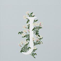 Buchstabe - Letter J (Jasmine - Jasmin) Graphic 45, Graphic Design, Edible Flowers, Typography Inspiration, Lettering Design, Botanical Illustration, Creations, Floral, Artwork