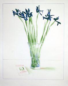 """""""Still Life with Book,"""" David Hockney, 1973"""