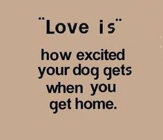 I Love Dogs, Puppy Love, Cute Dogs, Lucky Puppy, Silly Dogs, Funny Dogs, Funny Animals, Jiff Pom, Dog Life