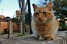 Fluffy by Mohammad Asfour on 500px